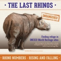 The Last Rhinos Find Refuge in World Heritage Sites | Visual.ly | Rhino | Scoop.it