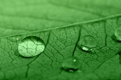 El color verde   Cromoterapia   Scoop.it