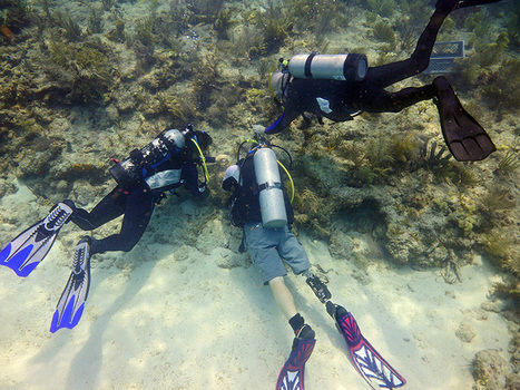 Vets, Teens Transplant Corals In Florida Keys Marine Sanctuary - CBS Local | Diving the Keys | Scoop.it