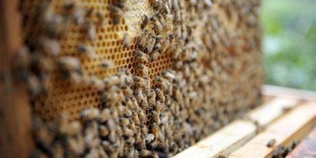 Abeilles : la France va soutenir l'interdiction ciblée de pesticides   Chic Planète   Scoop.it
