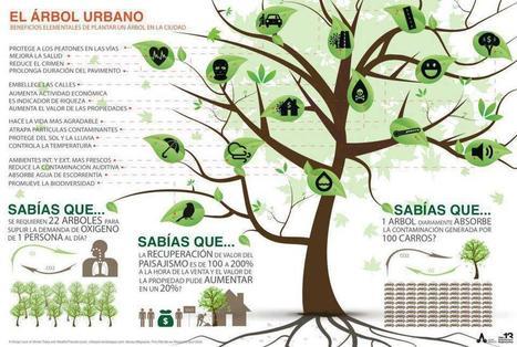 Arboles urbanos   Positivisme ambiental   Scoop.it