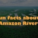 Fun Facts Archives   EFACT   Scoop.it