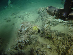 Different Sponge Species Have Highly Specific, Stable Microbiomes - Science Daily (press release) | Microbiome | Scoop.it