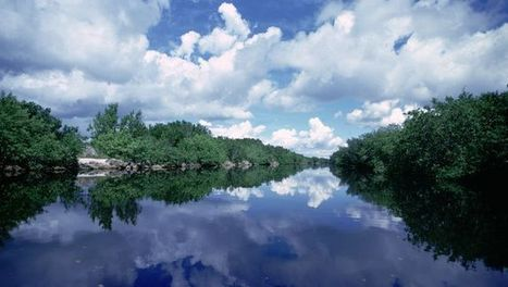 Take a walk on the Everglades' wild side | American Watersheds | Scoop.it