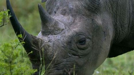 Geotagged safari photos could lead poachers right to endangered rhinos | Research Capacity-Building in Africa | Scoop.it