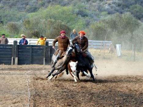 Fiesta de caballos criollos en la cabaña Matute Ayacucho - Diario Uno | Caballo, Caballos | Scoop.it