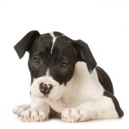 Dai voce ai cani di Carovigno! | Food for Pets | Scoop.it