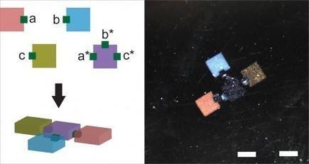 Programmable Gue Made of DNA Directs Tiny Gel Bricks to Self-assemble | Biomimicry | Scoop.it