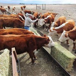 Feeding Antibiotics to Farm Animals May Worsen Climate Change | Sustain Our Earth | Scoop.it