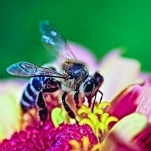 Pesticides Shown To Damage Bee Brains | Essentially Good Information | Scoop.it