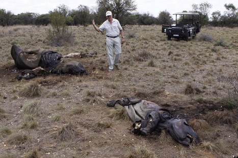 South Africa Rhino Poaching Hit Record High This Year | Wildlife and Environmental Conservation | Scoop.it