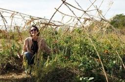 Et si l'agriculture de demain n'était ni biotech ni biologique mais permaculturelle ? | Le flux d'Infogreen.lu | Scoop.it