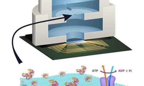 Engineers build biologically powered chip | Embedded Systems | Scoop.it
