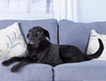 9 Tips for choosing pet-friendly furniture | Furniture to choose for the right design. | Scoop.it