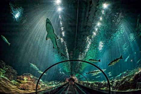 The Glass Tunnel Through The Shark Exhibit at Sea World, Orlando Florida | Nature | Scoop.it