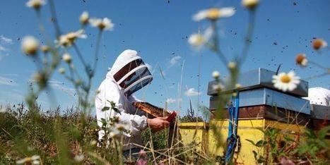 Loi sur la biodiversité : la France bannit les pesticides tueurs d'abeilles - le Monde | Actualités écologie | Scoop.it