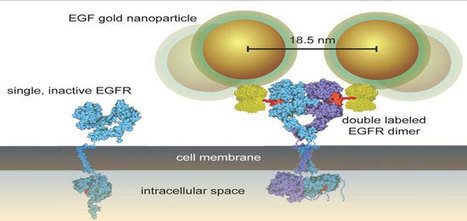 Nanoparticles reveal mechanisms of cancer cell growth in whole cells | Innovation | Scoop.it