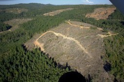 Northwest Forest Plan and Connectivity | GarryRogers Biosphere News | Scoop.it