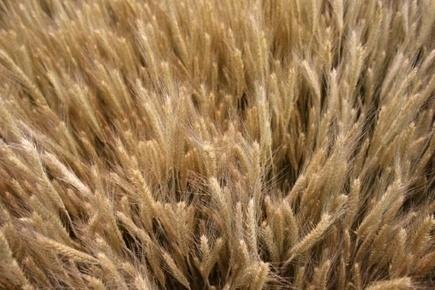 Faire baisser l'usage des produits chimiques en agriculture: le défi Dephy | CIHEAM Press Review | Scoop.it