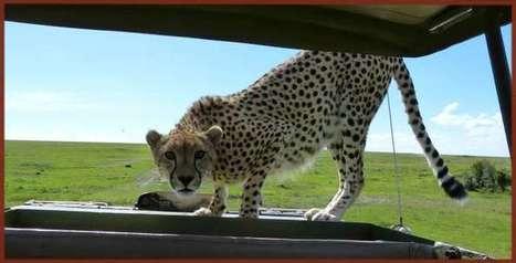 Kiwara Safaris im Tsavo ohne Massentourismus | TouristInfo | Scoop.it