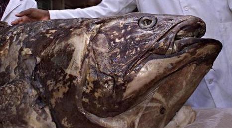 Le chaînon manquant entre le poisson et l'homme identifié: connaissez-vous le nom de cet animal vieux de plus de 70 millions d'années? | Aux origines | Scoop.it
