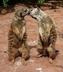 Really Weird Animal Behavior | Weirdest Animal Behaviors | Scoop.it