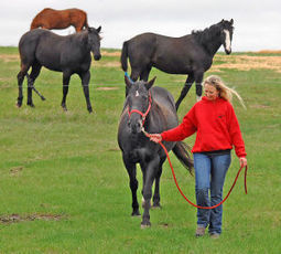 Rescued horse thrives in new home - Bismarck Tribune | Horses | Scoop.it