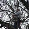 Above The Ground Tree Care LLC