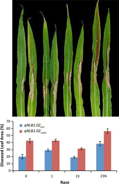 A remorin gene is implicated in quantitative disease resistance in maize | Plant-Microbe Symbiosis | Scoop.it