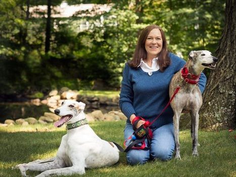 #VoliHero Christine Johnson, founder of Greyhound Rescue Rehab: Racing to Save Long-Legged, Fast Friends | Housewife Heroes | Scoop.it