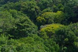 ¿Más diversidad aumenta el carbono forestal? | Formación | Scoop.it