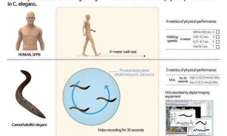 How fast you move can predict how healthy you'll be   Sustain Our Earth   Scoop.it