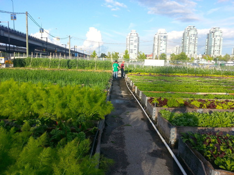 Portable Urban Farming. For real. | For the Love of Planet Earth | Scoop.it