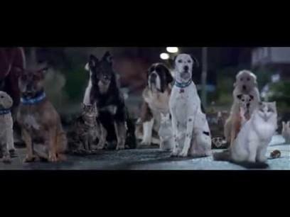Emile Duport : Une campagne qui a du chien Baxter, un chien... | Branded entertainment | Scoop.it