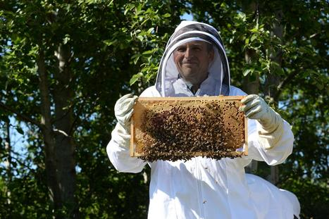 VIDEO: Experts say bees hold the secret to tackling human infections | Bees and beekeeping | Scoop.it