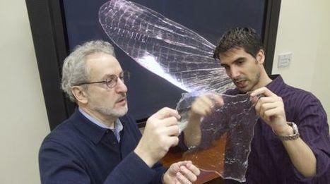 El adiós al plástico está en el caparazón de un insecto | tecnología industrial | Scoop.it