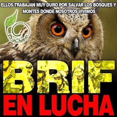 Brigadas forestales llevan casi 4 semanas de huelga en España + VÍDEO | LO + VISTO en la WEB | Scoop.it