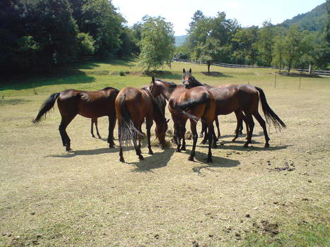 Social cohesion in horse groups | Evolution Equine Behaviour | Horse Behaviour | Scoop.it