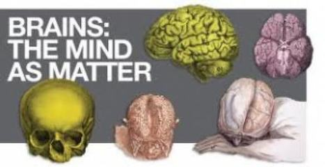 "New Wellcome exhibition: ""Brains: The mind as matter"" 