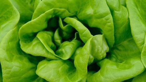 Plus d'une salade sur 10 contient des pesticides interdits   Chronique d'un pays où il ne se passe rien... ou presque !   Scoop.it