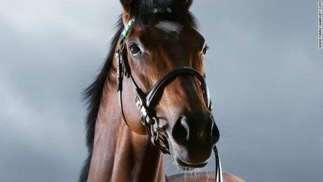 Life after Frankel: Can genetic 'lightning bolt' strike twice? | Horse Racing News | Scoop.it