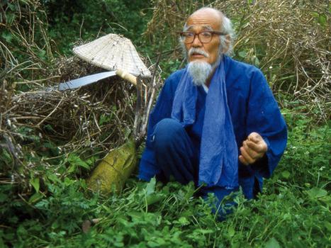 Fukuoka, y la senda natural del cultivo | Cultivos Hidropónicos | Scoop.it