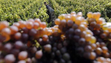 El vino, la nueva batalla en la guerra agrícola francoespañola. Noticias de Mundo | Pymes Vzla | Scoop.it