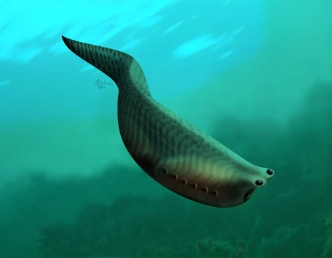 Fossil With Proto Jaws Finally Found. In the Burgess Shale, Naturally. | enjoy yourself | Scoop.it