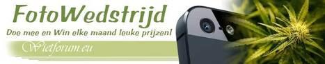 CoffeeshopNieuws.nl en Wietforum.eu organiseren in 2013 elke maand een Fotowedstrijd | Cannabis & CoffeeShopNews | Scoop.it
