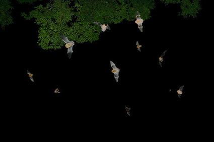 Bats in the Garden   100 Acre Wood   Scoop.it
