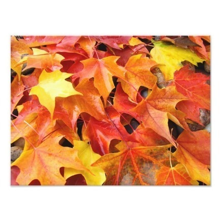 Autumn Leaves Colorful Photography Art Prints | Z Photography | Scoop.it