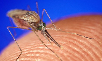 World Malaria Day: no time for complacency | Global Politics - Yemen | Scoop.it