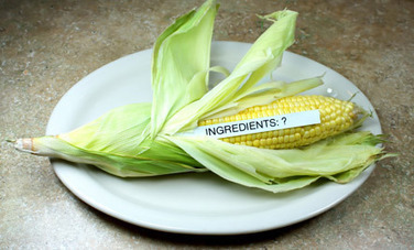 4 Potential Health Risks of Eating GMO Foods | Food & Health 311 | Scoop.it