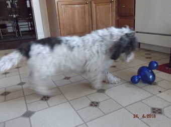 Play with Your Food | Modern dog training methods and dog behavior | Scoop.it